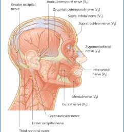 figure 4 1 nerves of the scalp and face lateral view  [ 1157 x 1327 Pixel ]