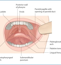 figure 9 1 oral cavity surface features  [ 1156 x 1045 Pixel ]