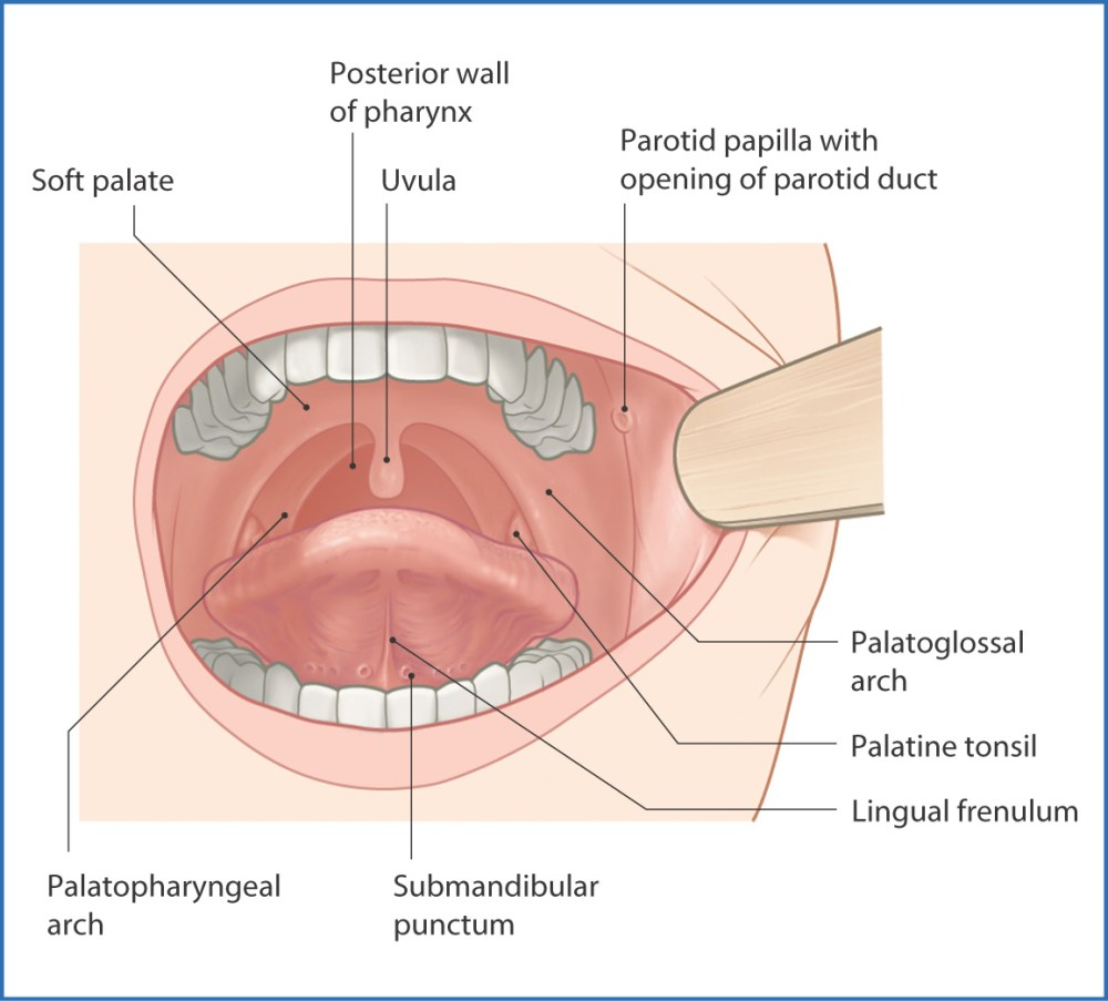 medium resolution of figure 9 1 oral cavity surface features