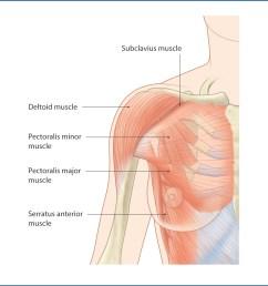figure 15 2 pectoral muscles  [ 1156 x 1209 Pixel ]