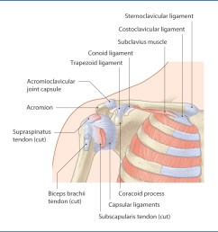 figure 18 1 glenohumeral joint anterior view  [ 1156 x 1202 Pixel ]