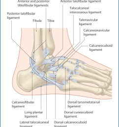 the joint capsule of the ankle is thickened on each side by ligaments figs 46 1 and 46 2  [ 1156 x 1374 Pixel ]