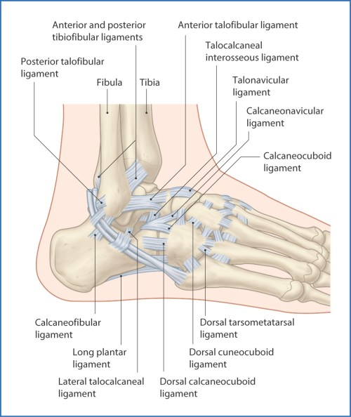 small resolution of the joint capsule of the ankle is thickened on each side by ligaments figs 46 1 and 46 2