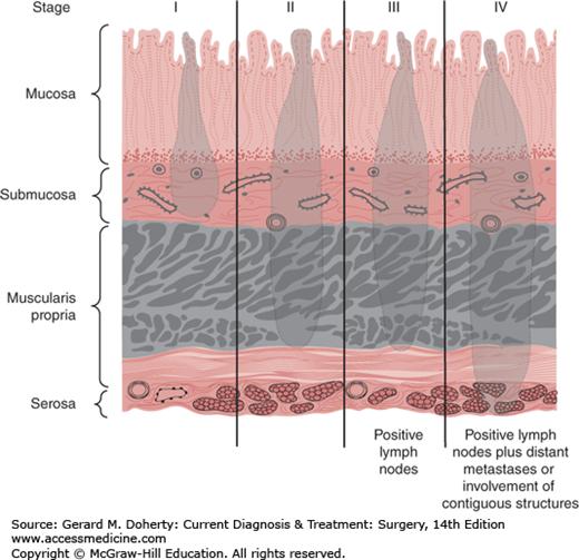 Stomach & Duodenum | Basicmedical Key