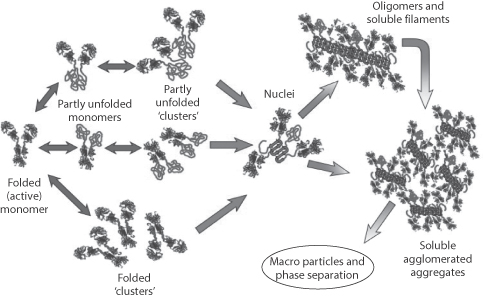 Peptides, proteins and monoclonal antibodies
