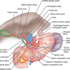 Portal Vasculature Diagram What Is Dot Net Framework With 3. Surgery Of The Liver, Biliary Tract, Pancreas, And Spleen | Basicmedical Key