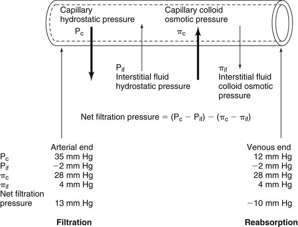 Pressure Body Osmotic