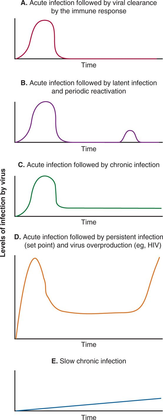 hight resolution of patterns of viral infection in these line diagrams various patterns of viral infection are shown including a acute viral infection followed by viral