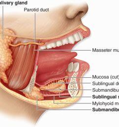 figure 16 1 major salivary glands  [ 1200 x 762 Pixel ]