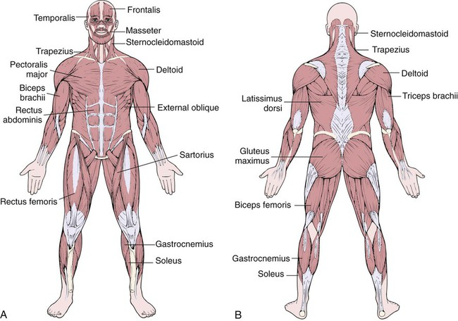 Diseases And Conditions Of The Musculoskeletal System