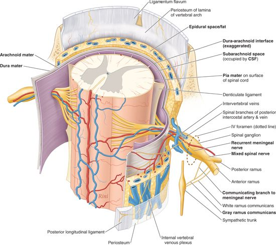 structures that form the vertebral arch - Mersn.proforum.co