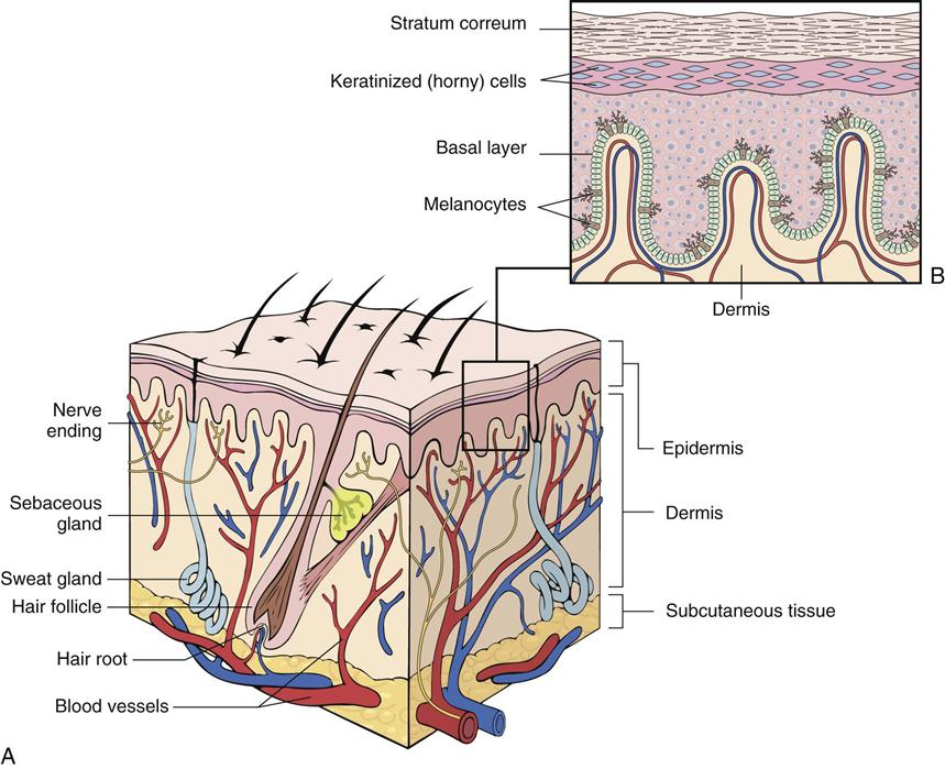 Diseases of the Skin and Subcutaneous Tissue: (ICD-10-CM Chapter 12 ...