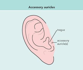 nose and throat | Basicmedical Key