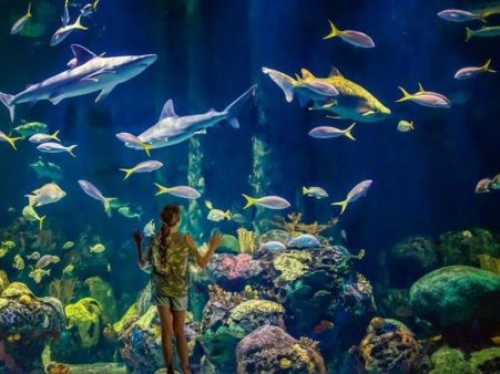 Wonders_of_Wildlife_Aquarium_Girl_At_Glass0-bb361d625056a34_bb361e6c-5056-a348-3a594f6c85853578