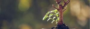 The Bonsai Diaries episode 2 – IT Resilience