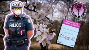 They've Locked Up The High Park Cherry Blossoms!