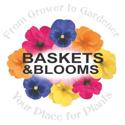 Baskets and Blooms