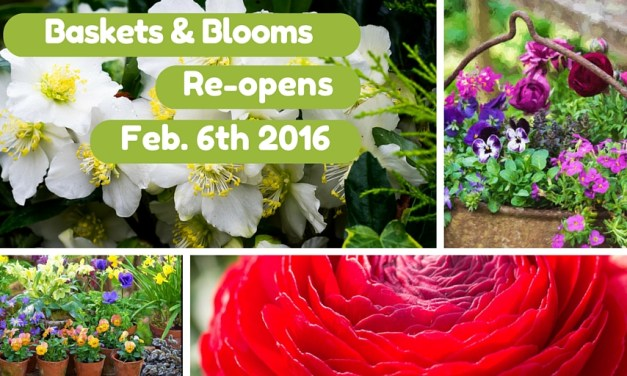 Re-opening February 6th 2016
