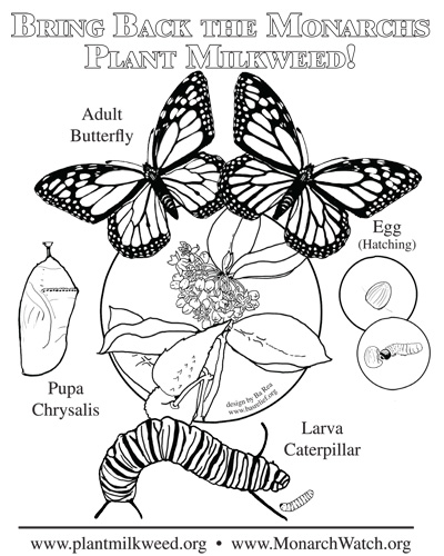 Monarch Coloring Page : monarch, coloring, Parent, Teacher, Notes, Relief, Products