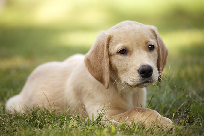 Pandangan mazhab tentang anjing