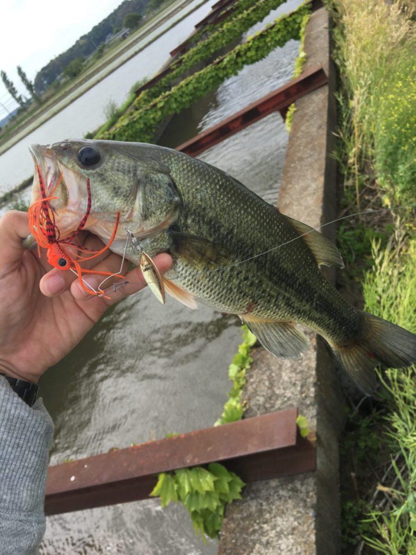 【電車釣行】GW3回目釣行 印旛沼の中央排水路 Dゾーンでバスゲット【京成酒々井駅】