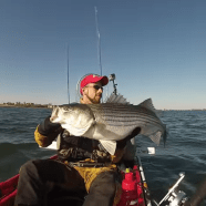 How to Catch Striped Bass Fish with Live Bait