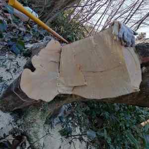 原木を伐採してギターを作る話ハンドメイドギターは果たして出来るのか?①