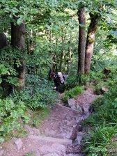 Abstieg vom Großen Inselsberg
