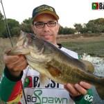 Uma das capturas de uma pescaria numa massa de água de acesso reservado (as outras forma semelhantes e muitas melhores)