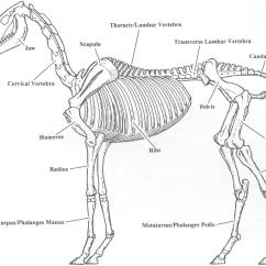 Horse Skull Diagram 3800 Series 2 Engine Need Skeleton Plans