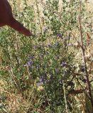 DSCF1866_crop_small