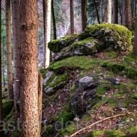 Darf man Moos im Wald sammeln?