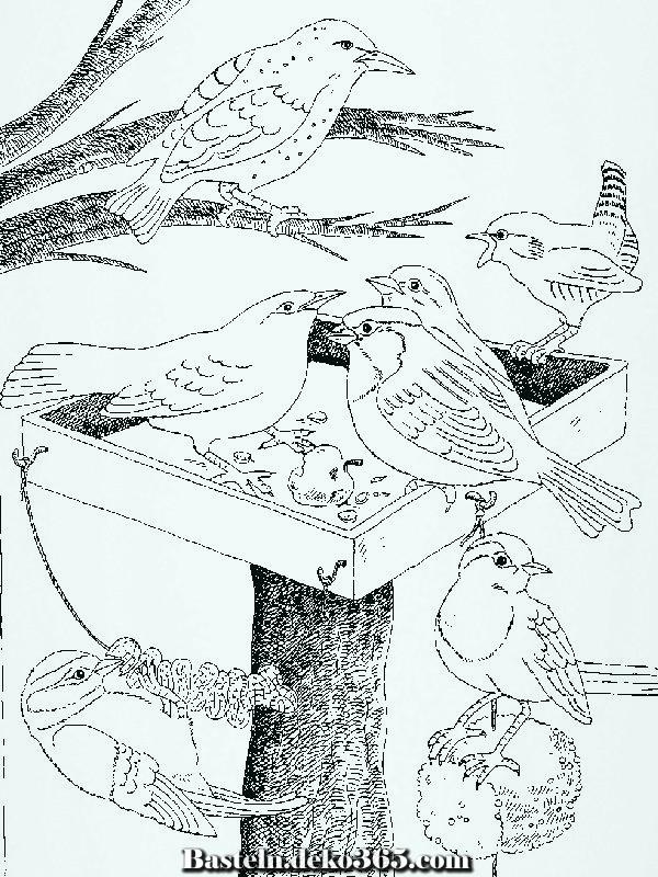 Malvorlagen Vögel - Vögel ausmalbilder - Basteln mit Kids