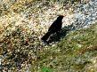 blackbird_3