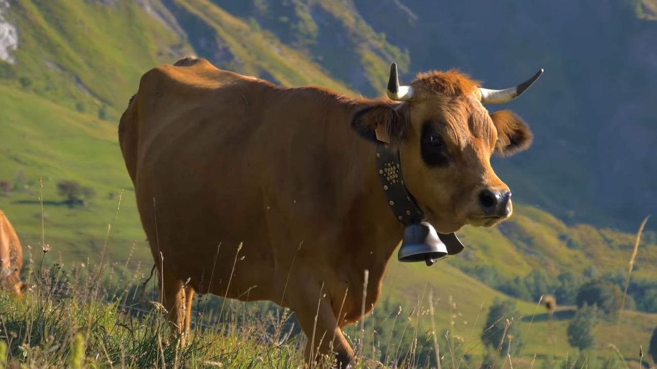 DJ Matafan fait tintinnabuler Les Cloches des vaches !