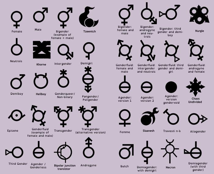 De praktische gevolgen van de gendergekte