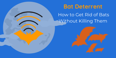 Bat Deterrent   How to Get Rid of Bats Without Killing Them