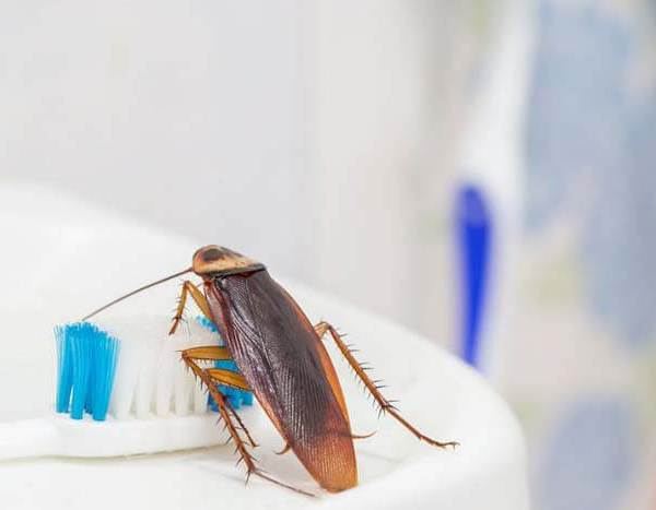 Where Do Roaches Come From In The Bathroom