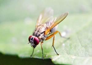 How To Get Rid Of Fruit Flies In Bathroom