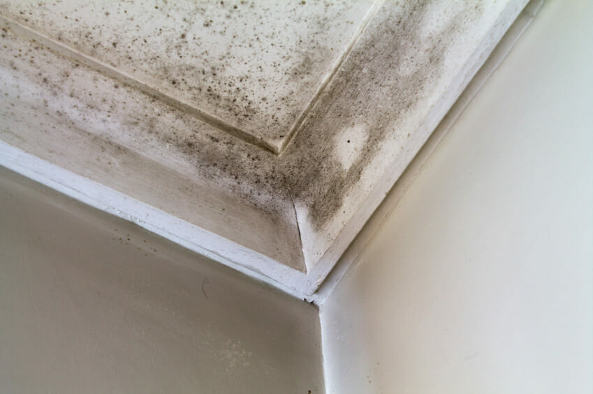 Clean Bathroom Mold and Mildew