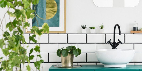 23 Best Plants For Your Bathroom The Bathtubber