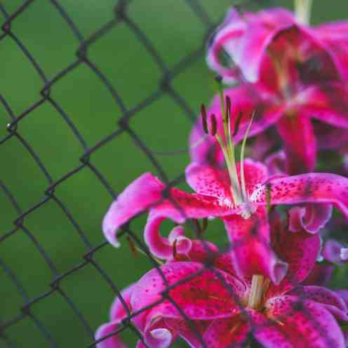 plan a garden that blooms all season