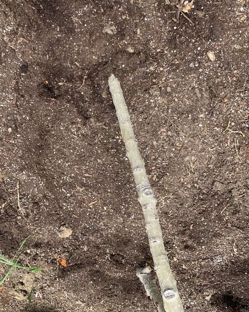 A post being dug into the soil.