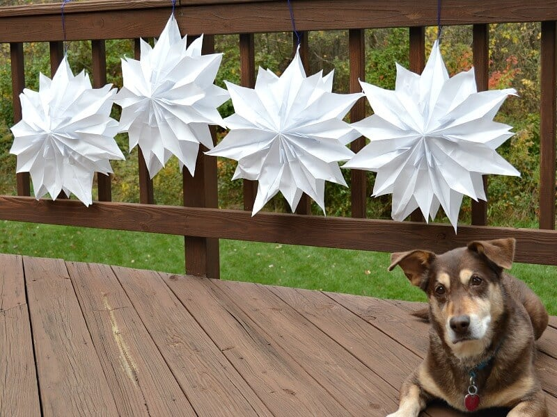 Four white star paper stars hung on a deck next to a dog.