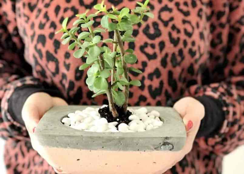 A cement planter with a plant inside