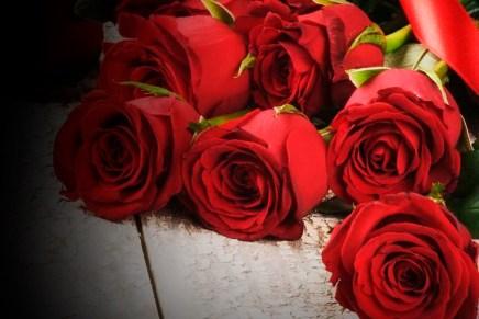 Top del día: Feliz día del amor y la amistad