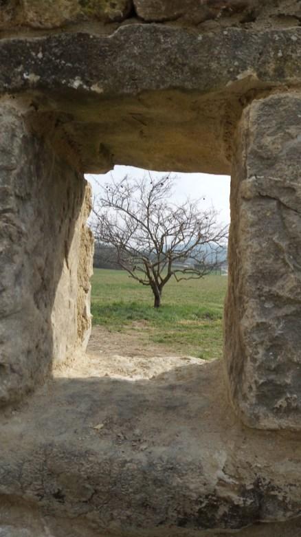 Une fenêtre sur la nature