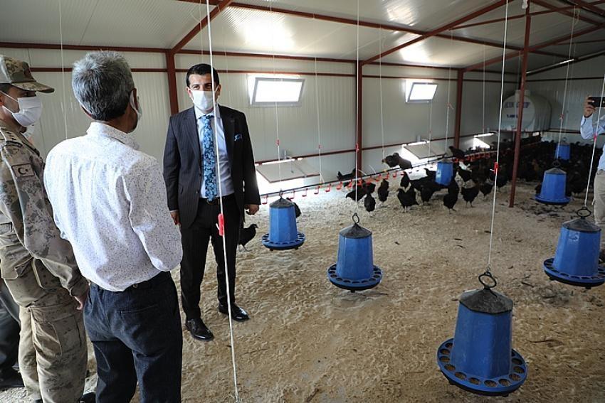 Hasankeyf'te yüzde 70 hibe ile 3 tavuk tesisi