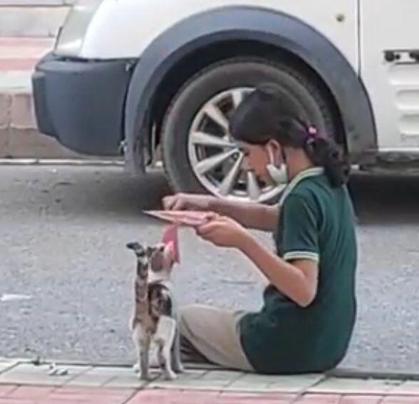 Batman'da küçük kızdan yürek ısıtan davranış: Yemeğini sokak kedisiyle paylaştı