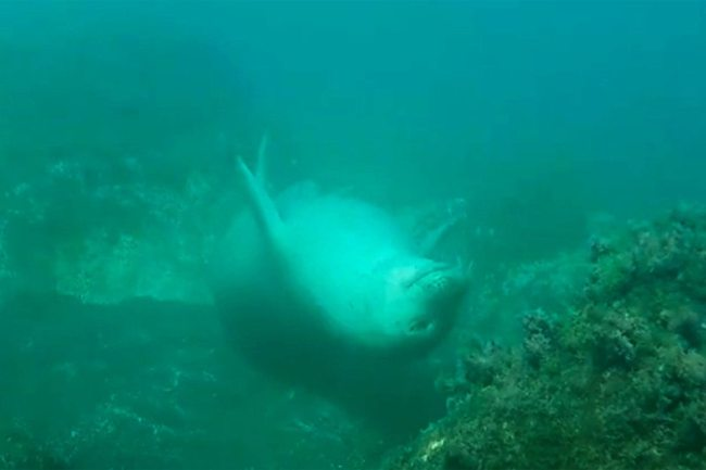 seal-monk-sleeping